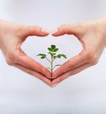 爱并且保护自然 免版税库存照片