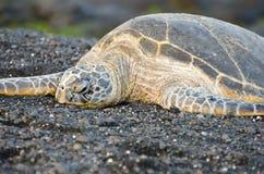 夏威夷在黑沙子海滩的绿浪乌龟 免版税库存照片