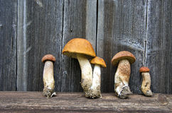 橙色盖帽牛肝菌蕈类蘑菇 免版税库存图片