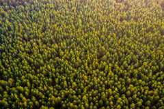 森林顶视图 库存照片