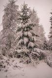 Зима в норвежских лесах Стоковые Фото