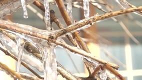 Παγωμένος κλάδος δέντρων το χειμώνα φιλμ μικρού μήκους