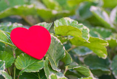 在绿色叶子的红色心脏有自然背景 免版税库存图片