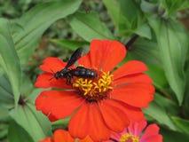 哺养在花花蜜的昆虫  免版税库存图片