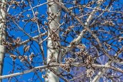 Ветви вербы Стоковое Изображение RF