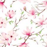 春天木兰开花无缝的传染媒介样式 免版税库存照片
