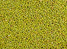 背景背景豆食物绿色系列 免版税库存图片