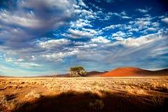 Пустыня Намибии, Африка Стоковые Изображения RF