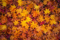 表明季节性变动的秋天叶子 免版税库存照片