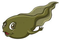 一只蝌蚪 免版税库存照片
