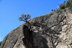 小的结构树 免版税库存图片