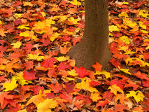 Δασικό τοπίο φθινοπώρου του Ιλλινόις Στοκ φωτογραφία με δικαίωμα ελεύθερης χρήσης