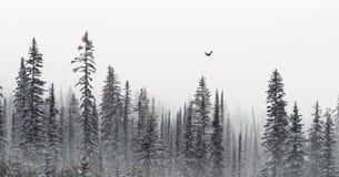 Знамя деревьев зимы Стоковые Изображения