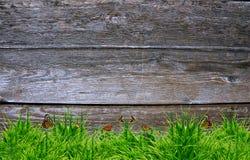 Трава свежей весны зеленая и завод лист Стоковое Изображение
