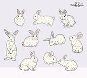 兔子集合 免版税库存图片
