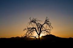 ξηρό δέντρο Στοκ εικόνα με δικαίωμα ελεύθερης χρήσης