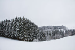 积雪的杉木森林和多雪的领域 图库摄影