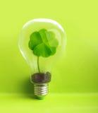 在电灯泡里面的绿色植物 免版税库存图片