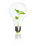 Зеленое растение внутри электрической лампочки Стоковые Фотографии RF