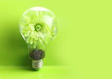 在电灯泡里面的绿色植物 库存图片