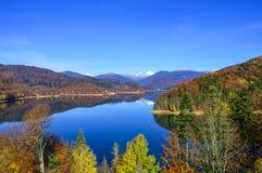 秋天下跌叶子反映水 库存图片