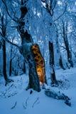 Μπλε χειμερινό δάσος με το ενιαίο δέντρο με τη μυστήρια πυράκτωση μέσα Στοκ Φωτογραφία