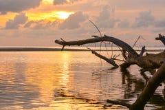老树在海 免版税库存图片