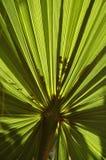 日叶子被采取的掌上型计算机晴朗 免版税库存图片