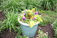 在绿松石罐的紫色蝴蝶花 免版税库存照片