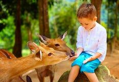 喂养从手的逗人喜爱的男孩幼小鹿 在鹿的焦点 免版税库存照片