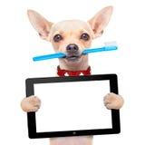 牙刷狗 库存照片