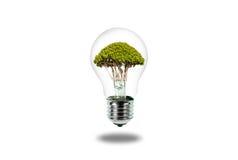 在白色隔绝的电灯泡里面的树 免版税库存图片