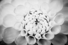 Μικρό έντομο στο λουλούδι, χαμένο λεπτομέρεια ζώο Στοκ φωτογραφία με δικαίωμα ελεύθερης χρήσης