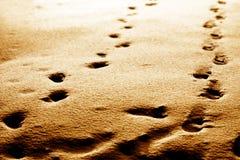 следы ноги Стоковые Фото