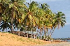 冲浪棕榈树和金黄沙子海滩围拢的酒吧 库存图片
