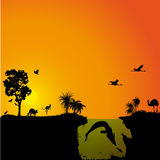 Австралийская фауна и флора Стоковая Фотография RF