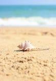 在海滩沙子的壳 免版税库存图片