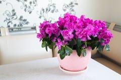 桃红色杜娟花和玫瑰在地板上站立在屋子里 免版税库存图片
