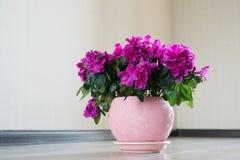 桃红色杜娟花和玫瑰在地板上站立在屋子里 免版税库存照片