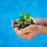 年幼植物在反对蓝色海背景的手上 免版税库存照片