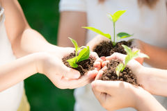 коричневейте покрытую землю дня относящое к окружающей среде листво идет идя зеленый вал текста лозунгов высказываний фраз природ Стоковая Фотография RF