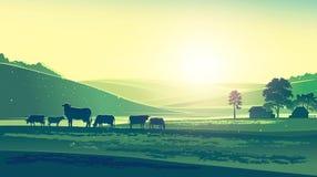 夏天风景和母牛 免版税库存图片