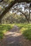 自然供徒步旅行的小道 免版税库存照片