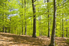 δάση φωτός του ήλιου Στοκ φωτογραφία με δικαίωμα ελεύθερης χρήσης