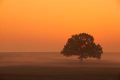 Αξιοσημείωτο μόνο δέντρο στην υδρονέφωση πρωινού Στοκ Εικόνες