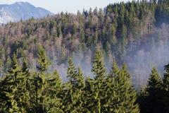 Απόκρυφο δάσος Στοκ εικόνες με δικαίωμα ελεύθερης χρήσης