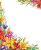 与虹膜和百合花的框架 免版税库存图片