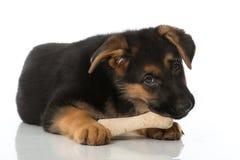 与骨头的小狗 库存照片