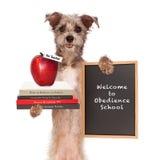 Δάσκαλος σχολείου υπακοής σκυλιών Στοκ εικόνα με δικαίωμα ελεύθερης χρήσης