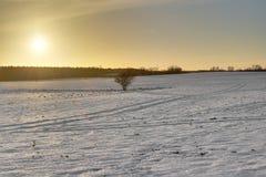 温暖的冬天风景 库存照片